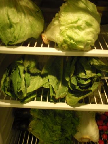 gröna blad i kylen