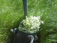 En ryggsäck full med kamomill